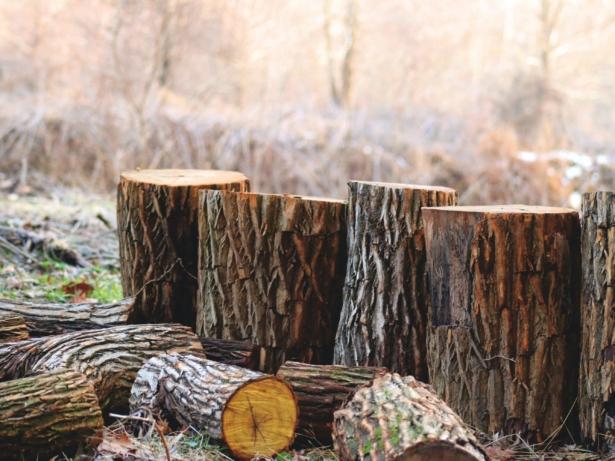 Avverkning av träd inför ny gång- och cykelväg i Svartbäcksmåla