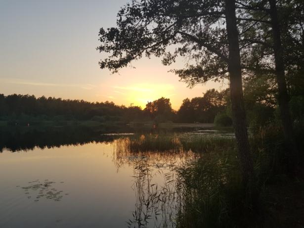 Vy över Linnéasjön. Träd i förgrunden.